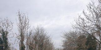 area sgambamento cani Rovigo