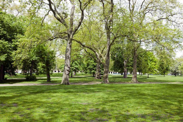 Parco (foto di repertorio shutterstock)